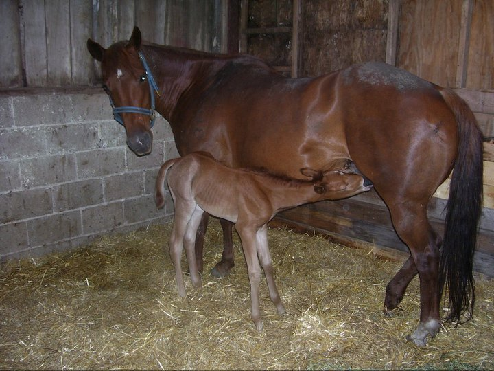Pixie's baby pic, she was born here. I've put down WAY too many horses from old age, so she may be my last horse. Pixie's mom, Dixie, was 20 when she had her, and lived to 27!!