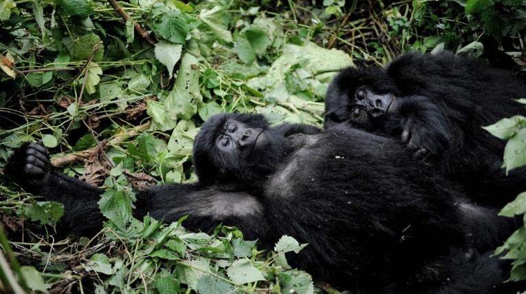Virunga_National_Park