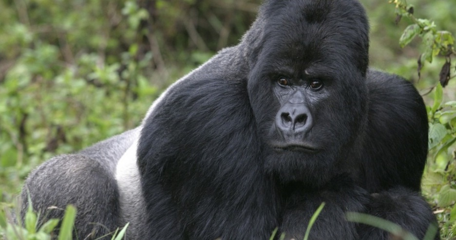 4 Day Gorilla Trek