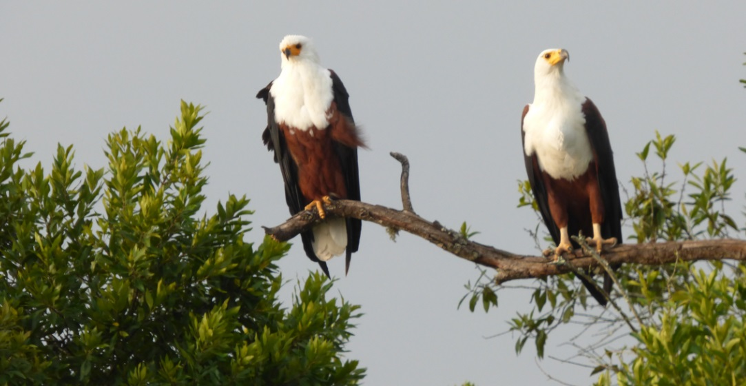 Birding_Lake_Mburo