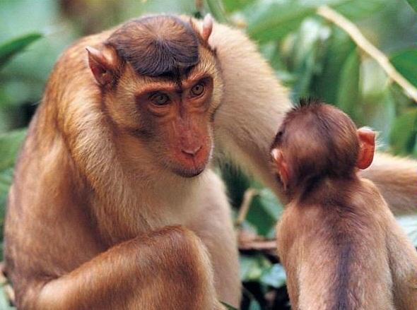 patas monkey.jpg
