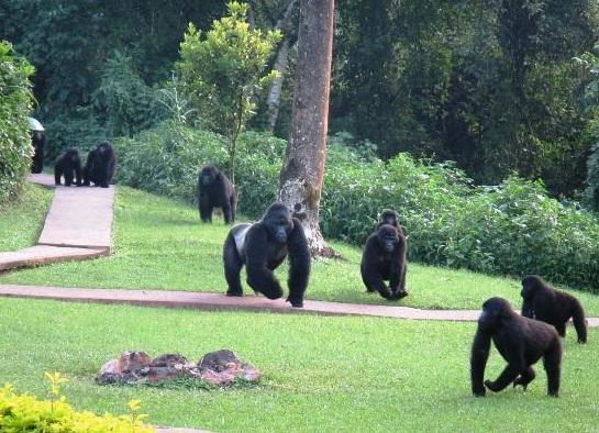 sanctuary Gorilla Foerest Camp.jpg