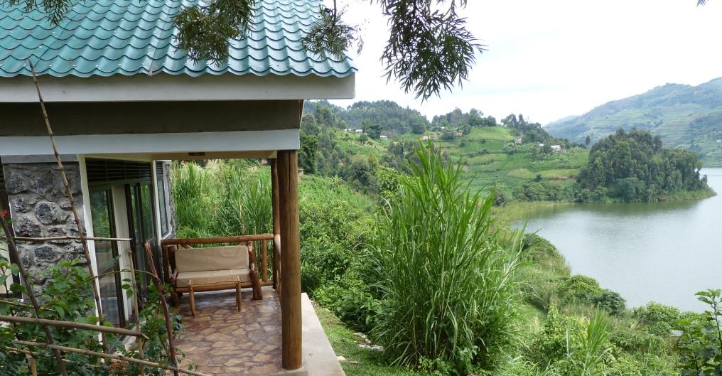 bwindi jungle 3.png