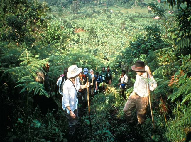 bwindi jungle 7.png