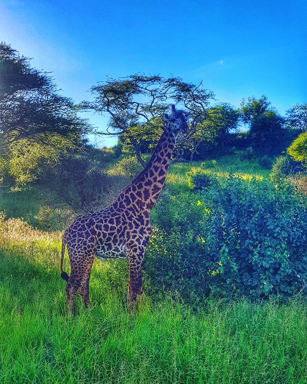 Uganda_Safari5.jpeg