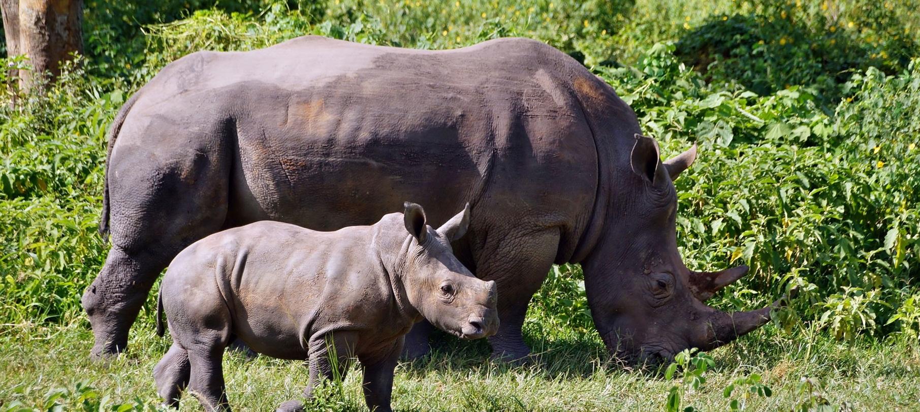 rhinos 24.jpg