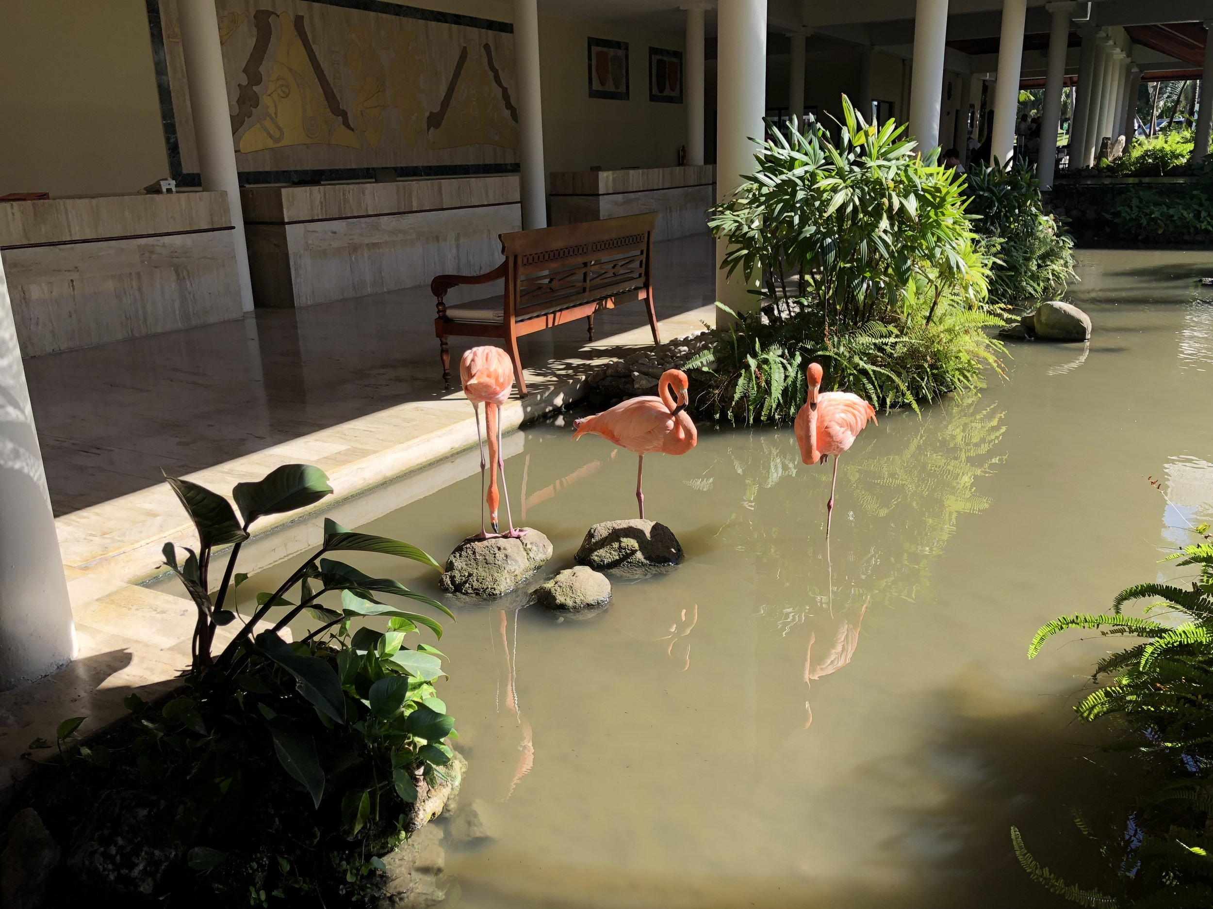 Flamingos are for seeing, not touching. ;)