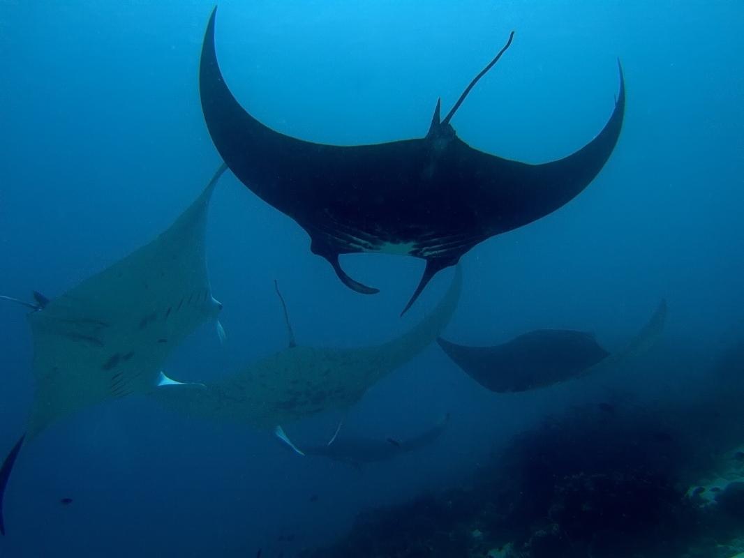 Raja Ampat Islands Indonesia 2.jpg