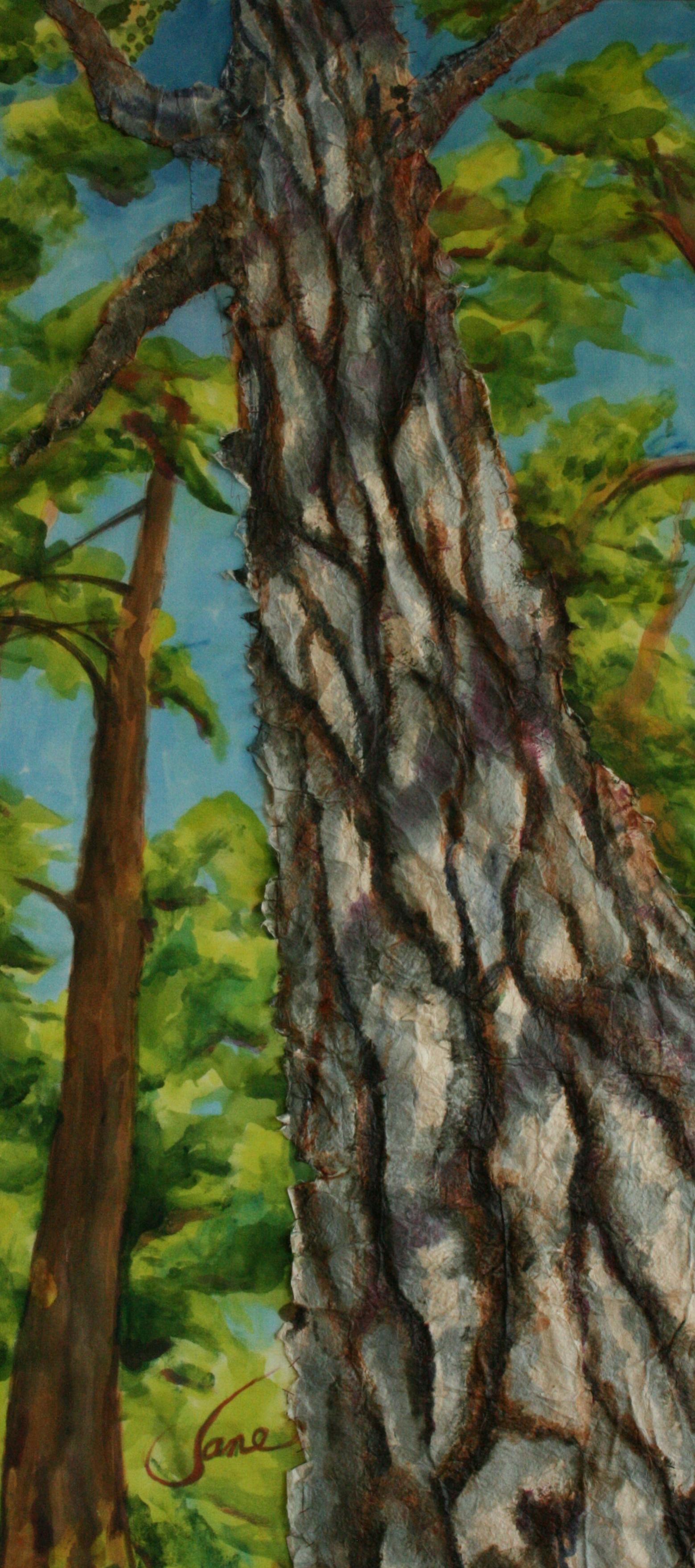 GNP Conifer.jpg