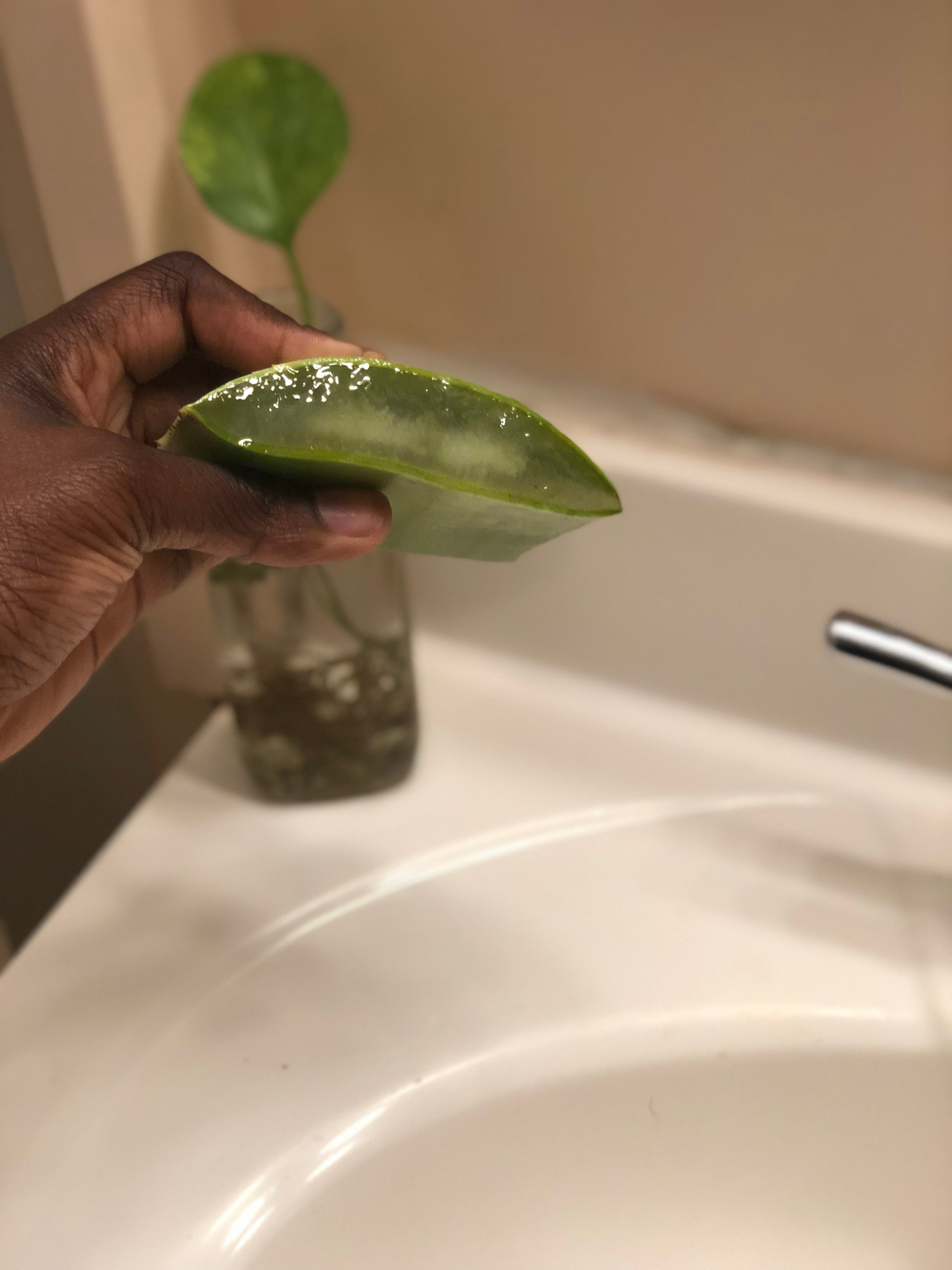 aloe vera is super interesting and has hella benefits! would absolutely recommend using on your skin, hair, your life, etc.