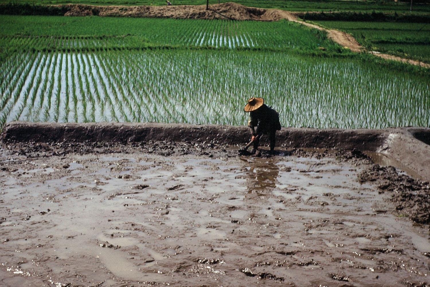 60- Preparing Rice Paddy for Planting