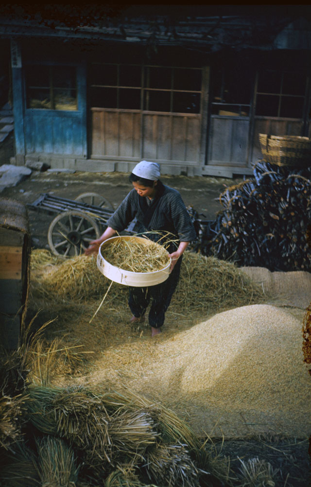 201- Winnowing Rice