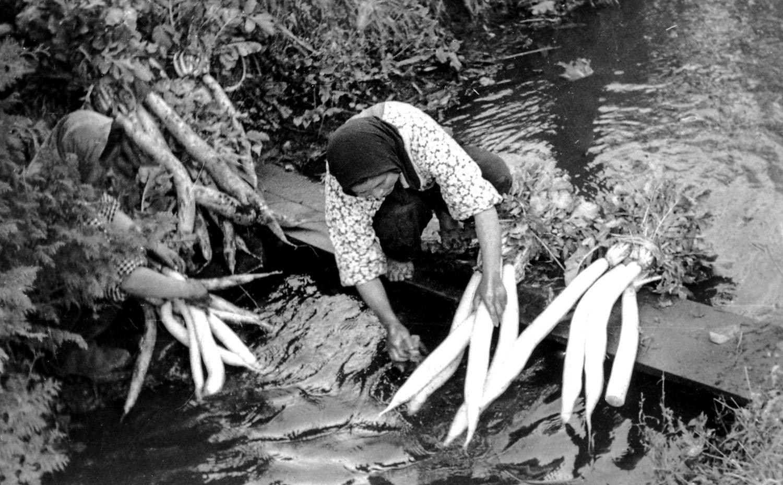 120- Woman Washing Daikon Radishes, Yamoto