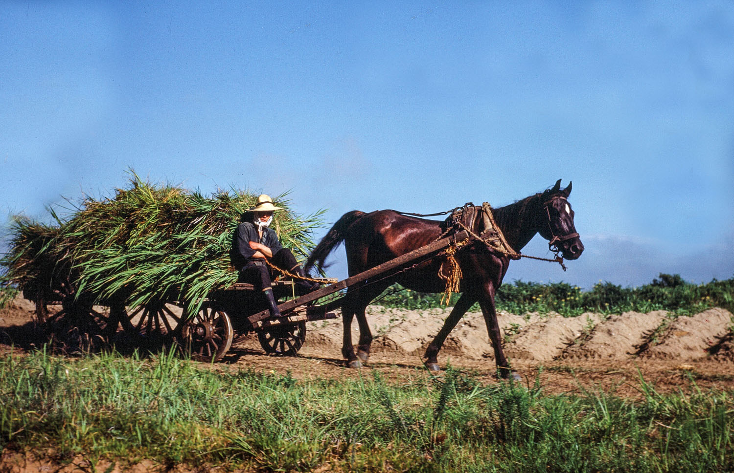 43- Horse Drawn Cart with ?