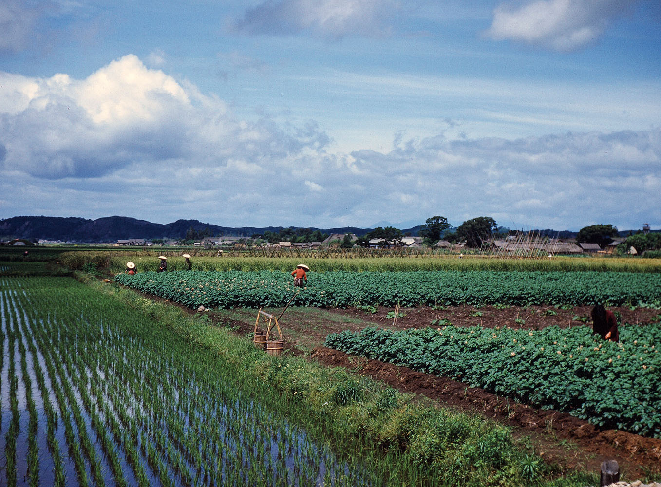 123-Yamoto Area Rice Fields