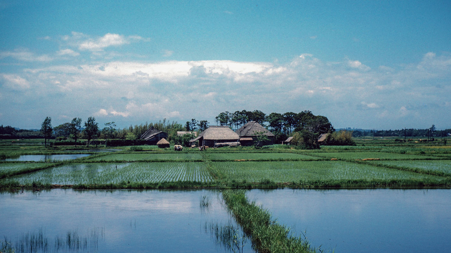 322- Rice Fields and Farm