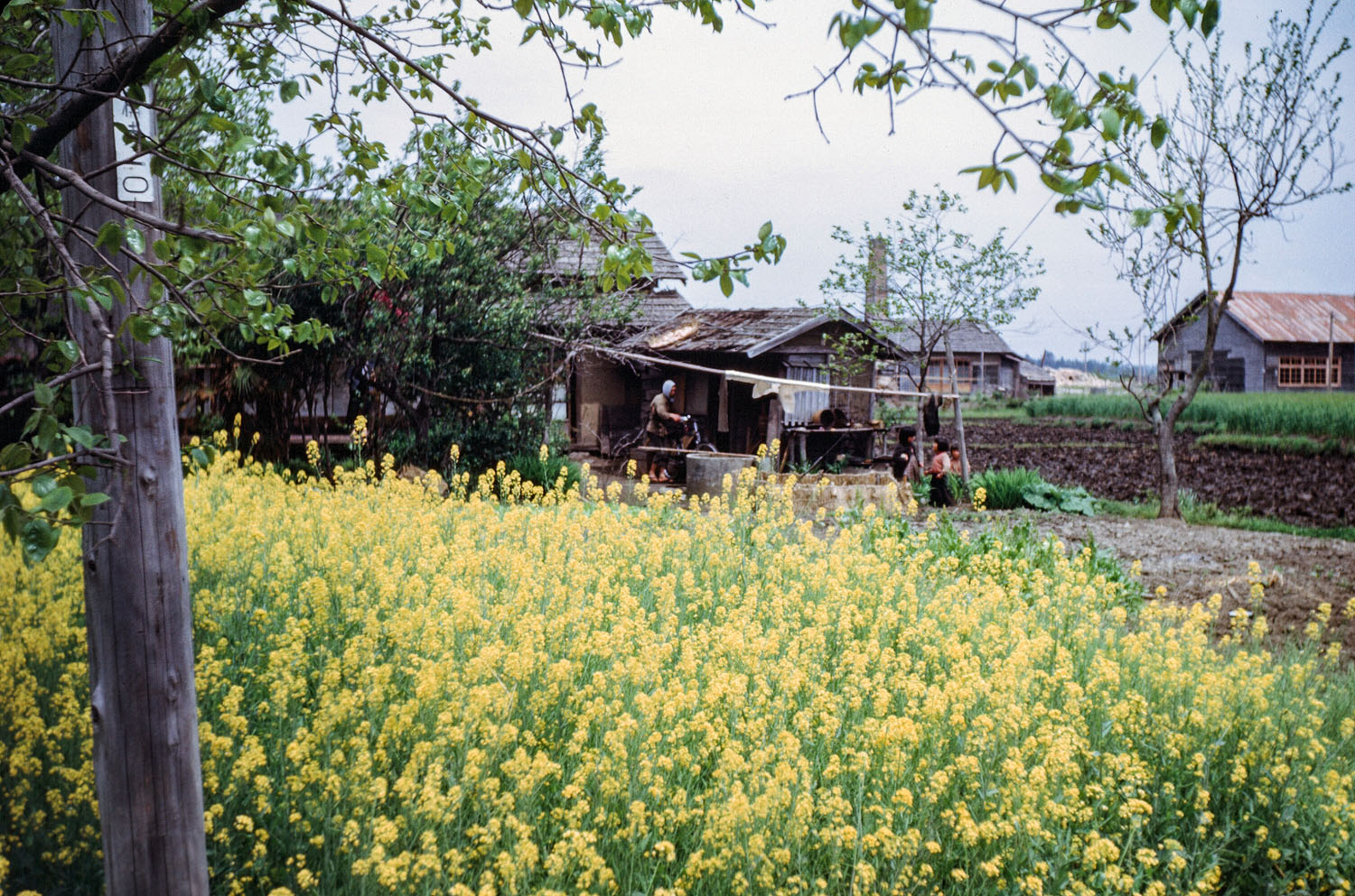 451- Flowers in front of Farmhouse