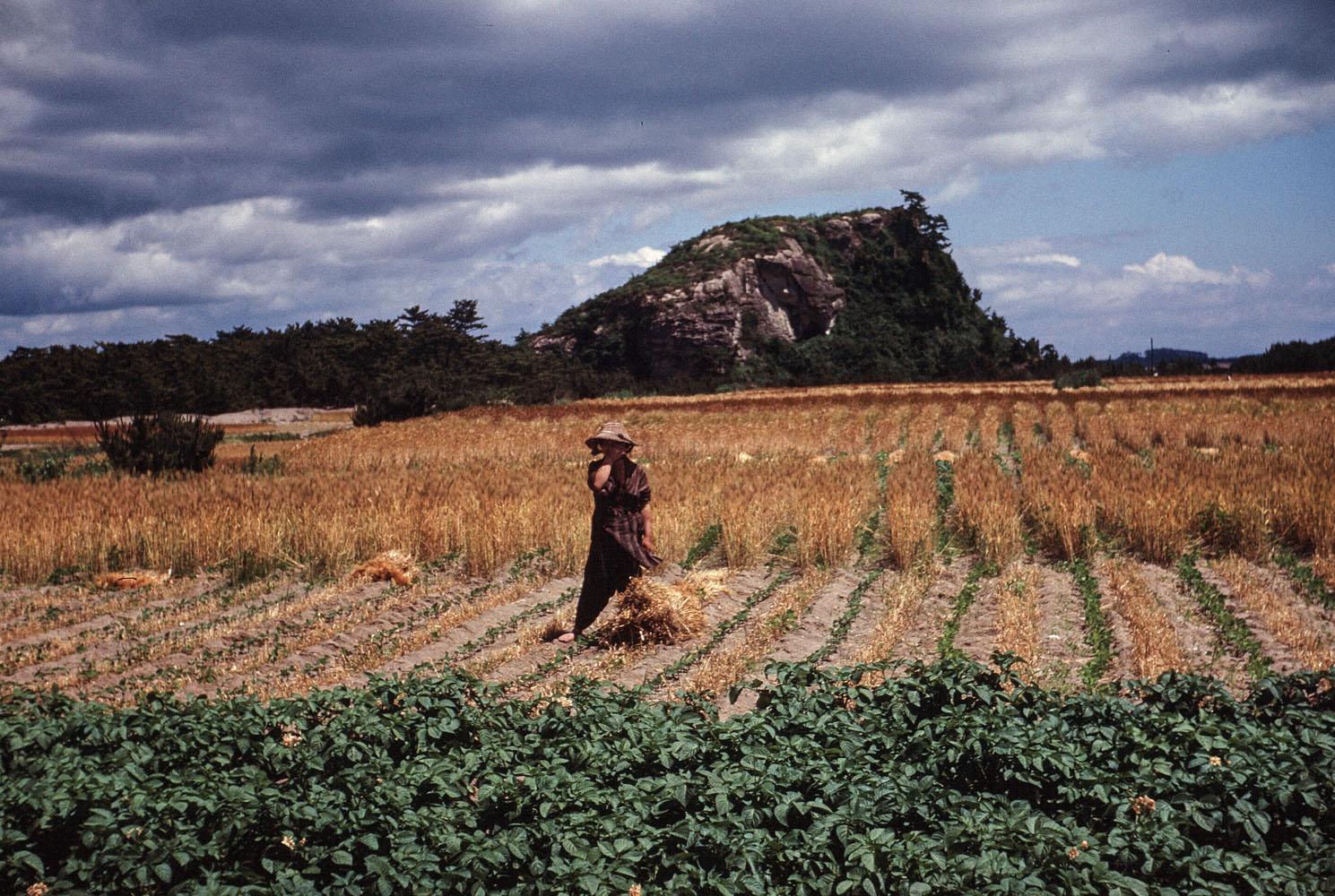 456-Rice Fields with Hill Beyond- Nobiru, Higashimatsushima