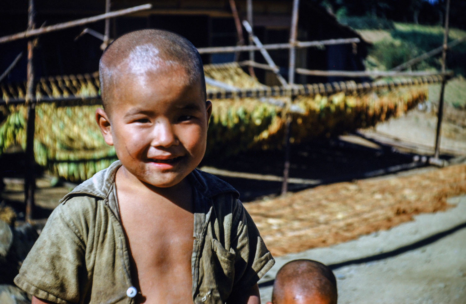 510- Young Boy in front of Tobacco Drying Racks