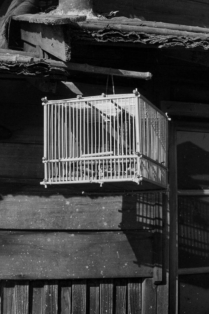 545-Bird Cage