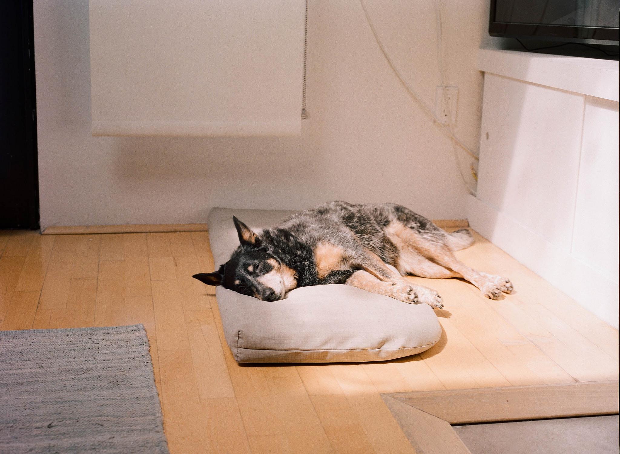 the laziest