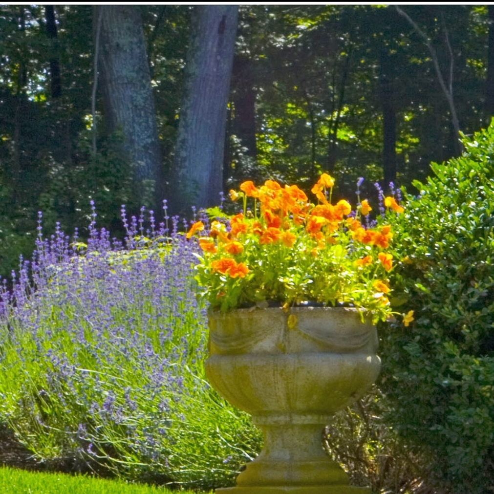 PLANTING/GARDENS