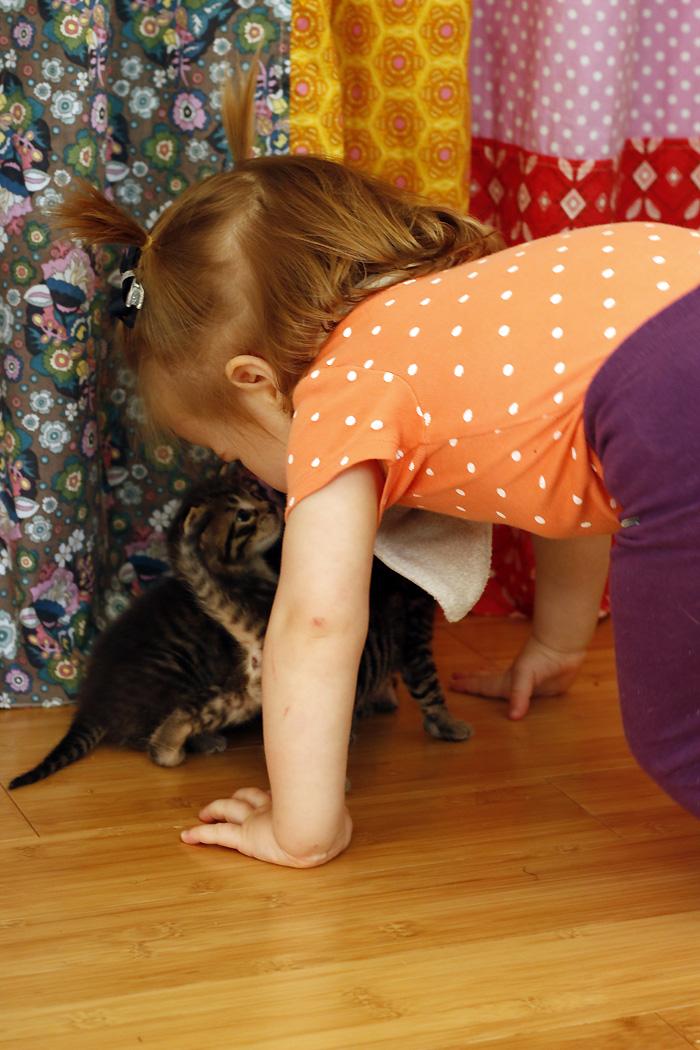 Rora kitten nosing.jpg