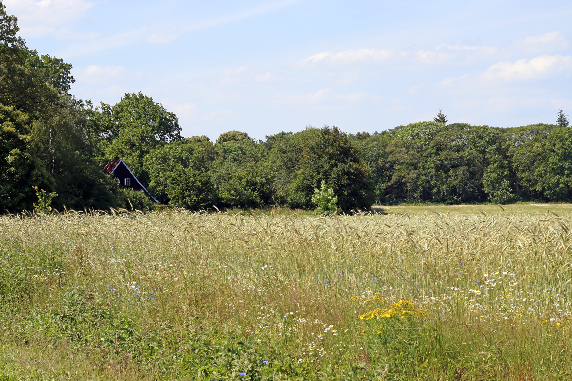 Dutch meadows. Stitched in Color.jpg