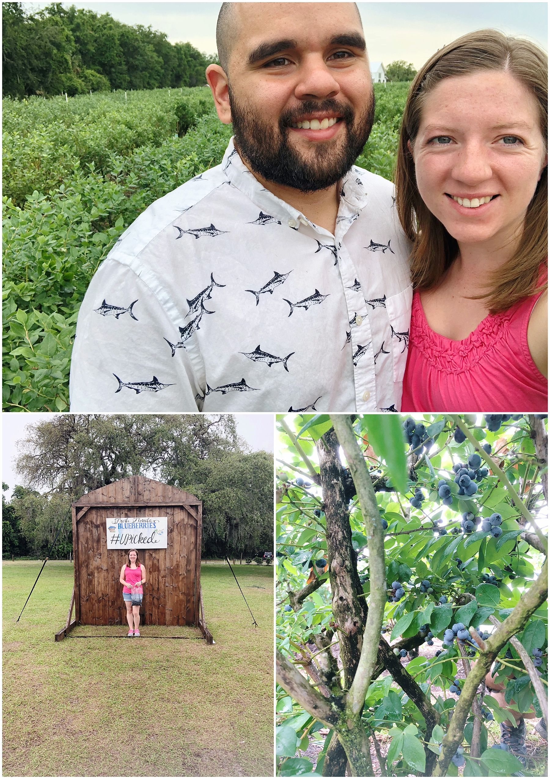 Andrew and I had the BEST morning blue berry picking together at Ever After Farms. I loved getting to have time off to spend with him! This was a much needed date, and it was so much fun!