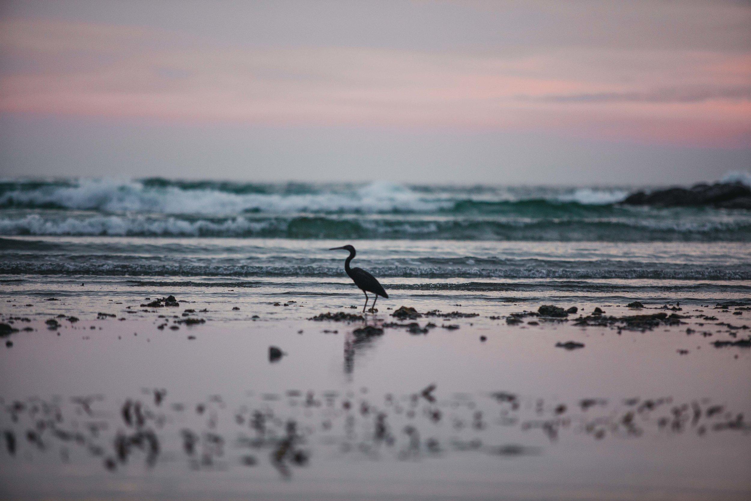 Bird-1306.jpg