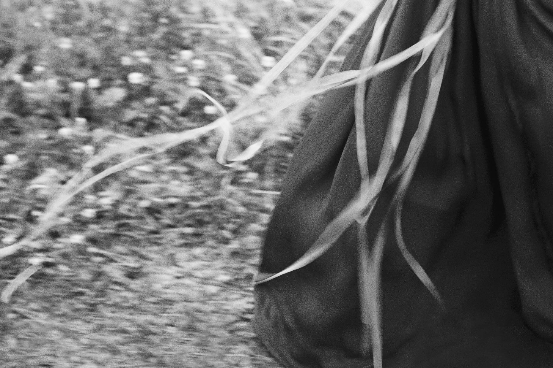 2013_0826_windswept_red_238f_bw.jpg