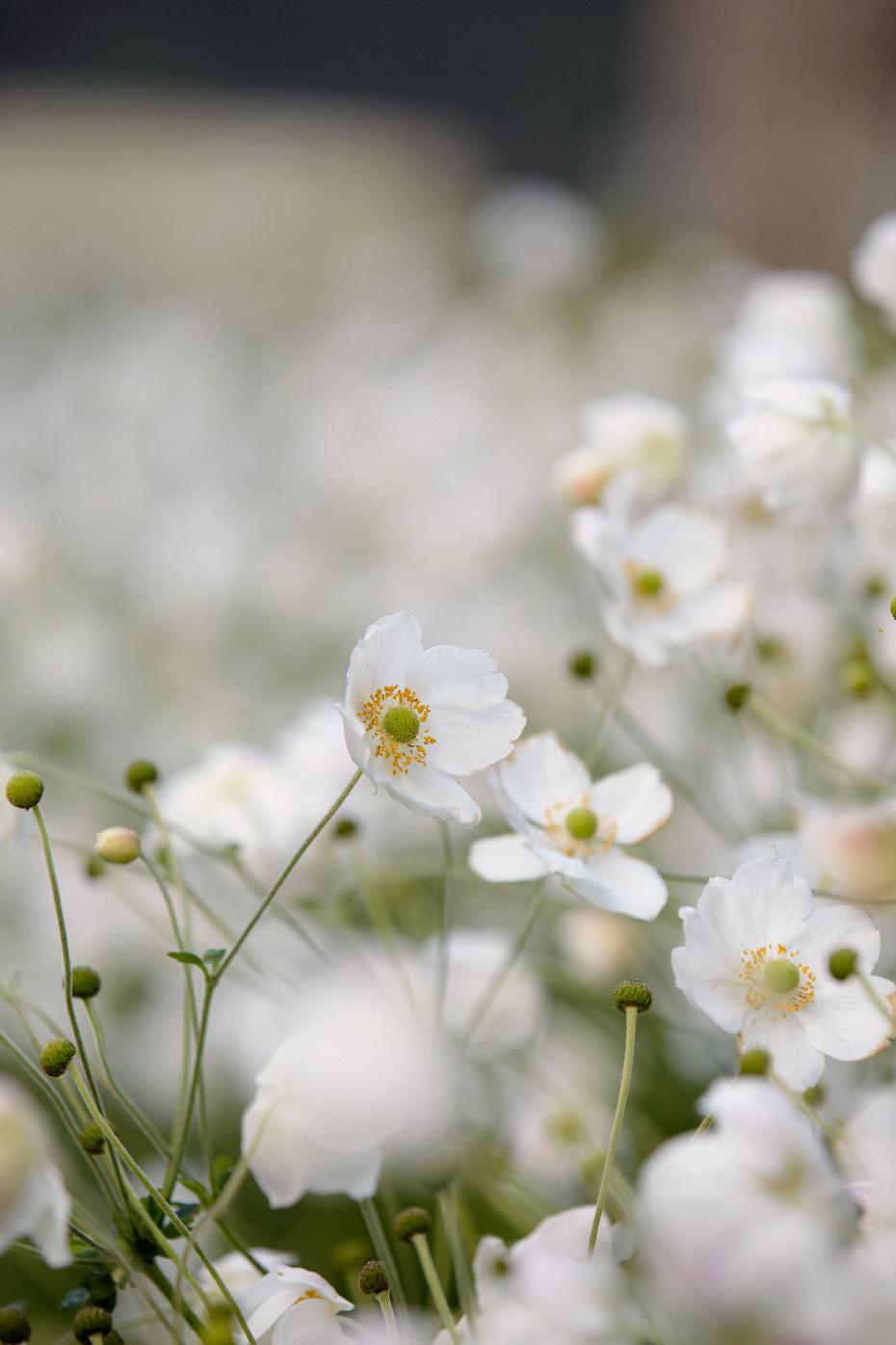 Stacey Van Berkel Photography I Pretty white flowers
