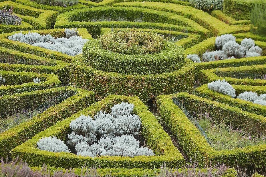 Stacey Van Berkel Photography I Beautiful boxwood hedge maze I Bodyskallen Hall & Spa I Wales