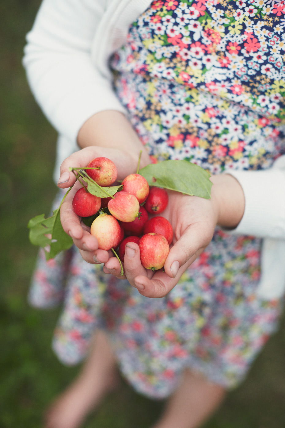 Stacey Van Berkel Photography I Young girl holding red crabapples in her hands with floral dress I Stewiacke, Nova Scotia, Canada I Canadian LIving Magazine