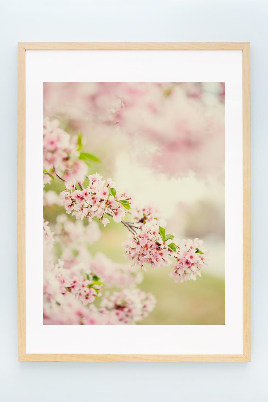6_blossoms_II.jpg