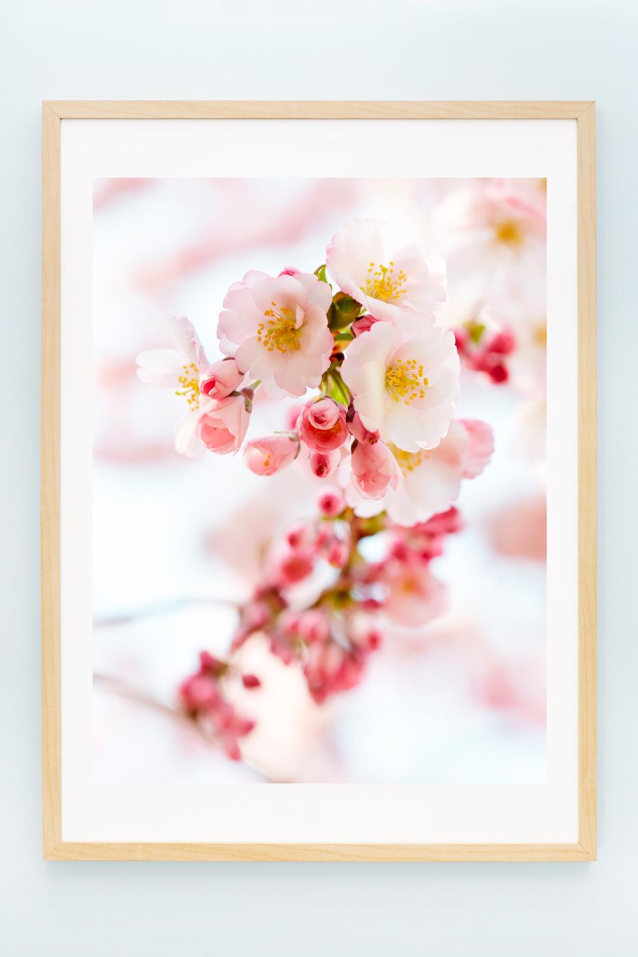 1_Blossoms_I.jpg