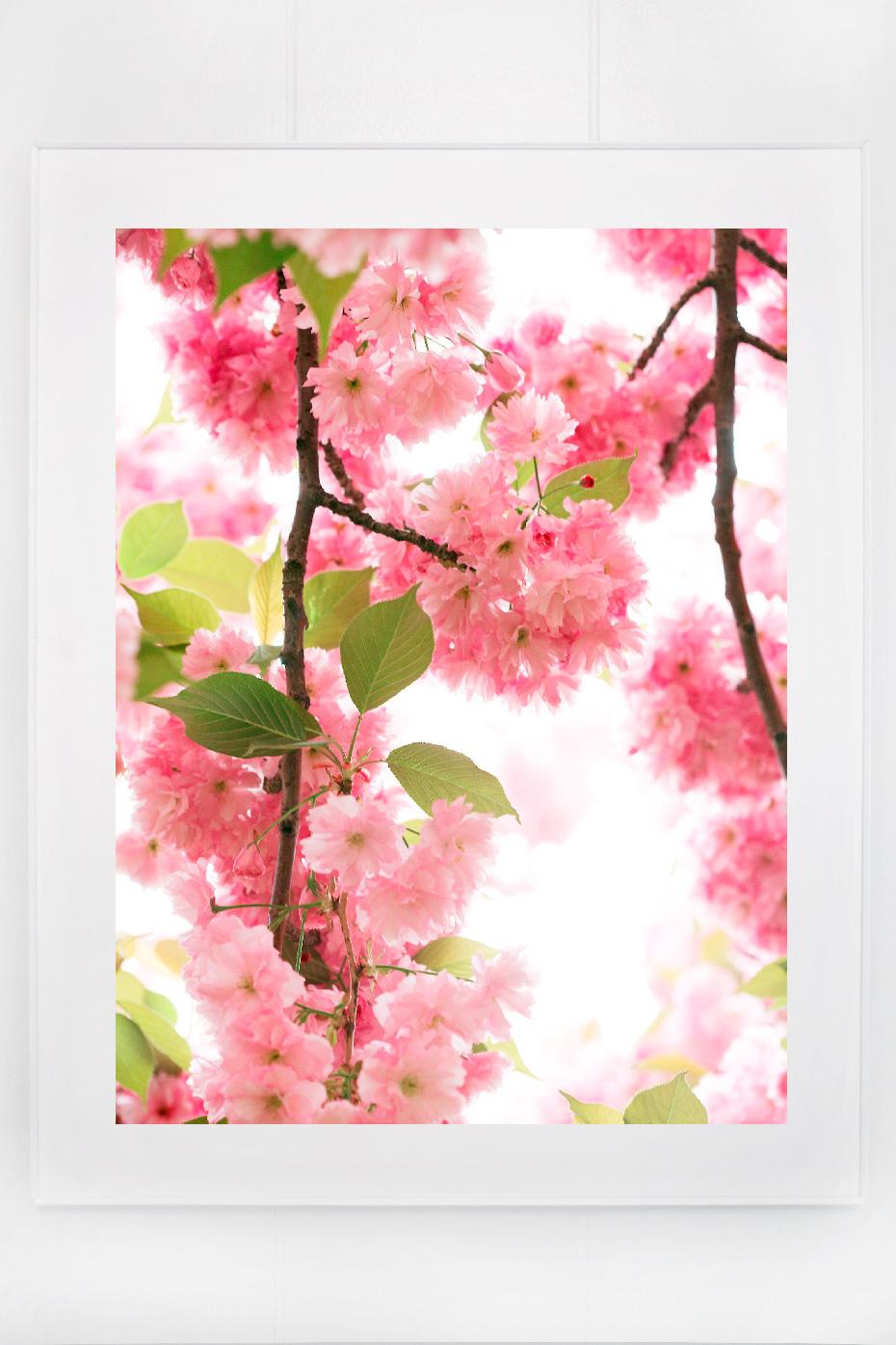 5_blossoms_I.jpg
