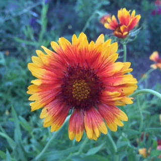 Wildflower, North Mountain Park, Ashland, Oregon