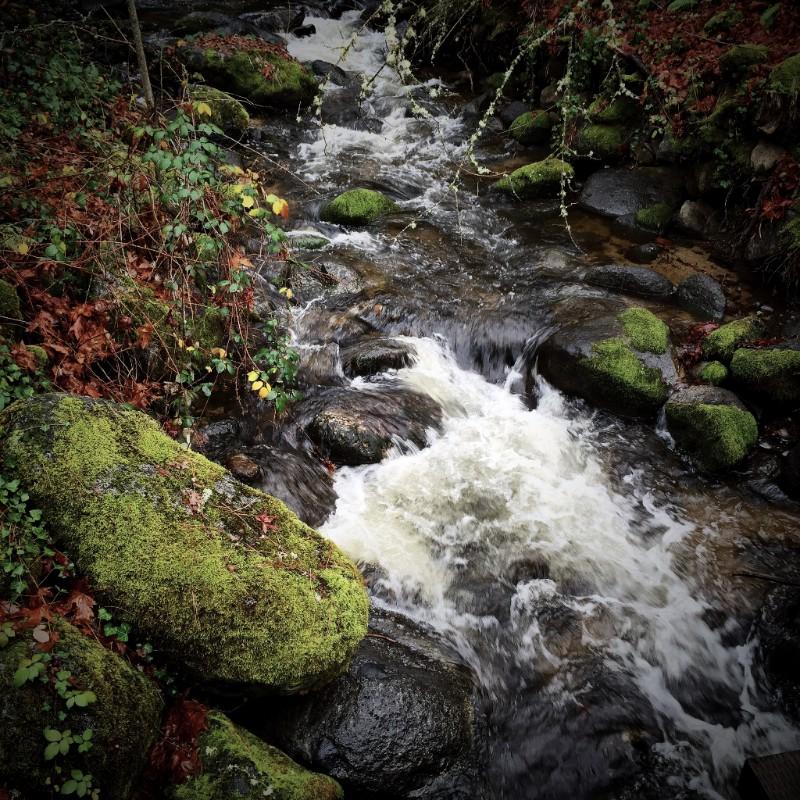 Lithia Creek in rain, Ashland, Oregon.
