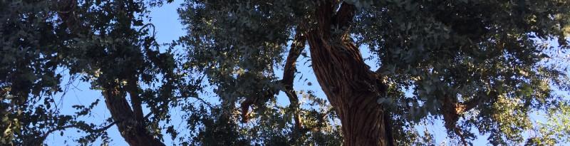Rainforest, above Fryman, Los Angeles