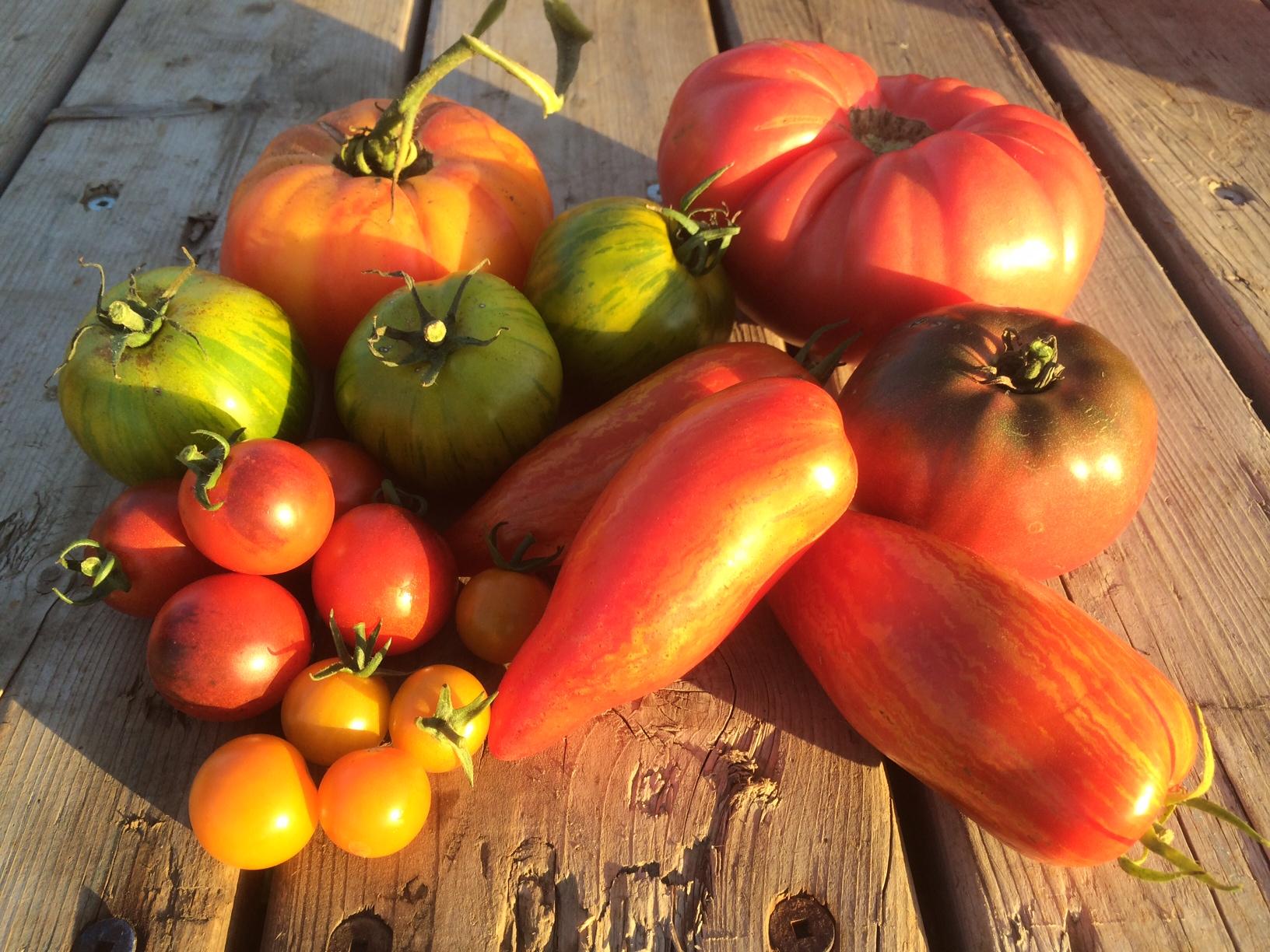 Tomates Variés