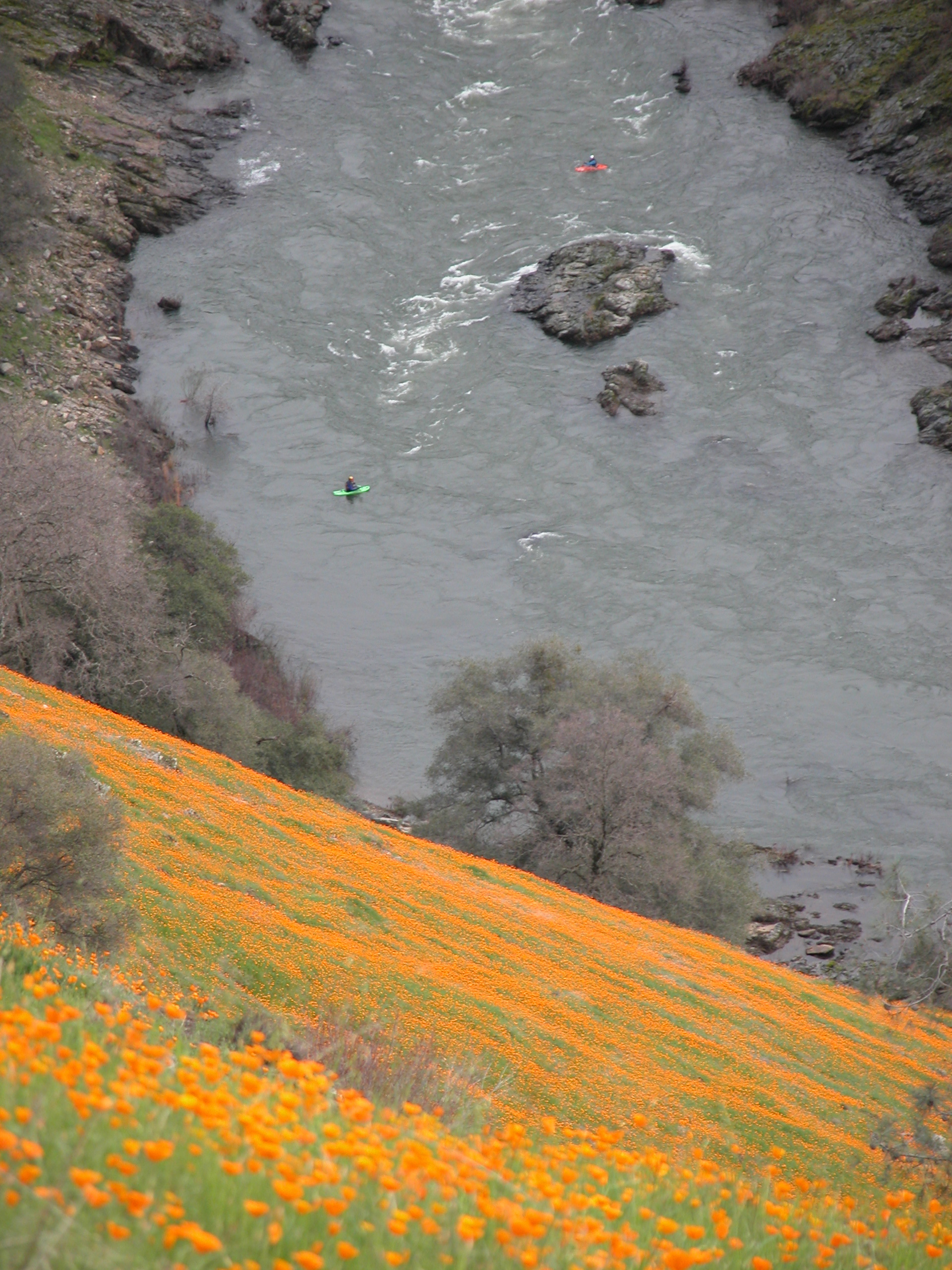 This picture is from the Upper South Fork American, a popular run that many use Camp Lotus to take-out from.