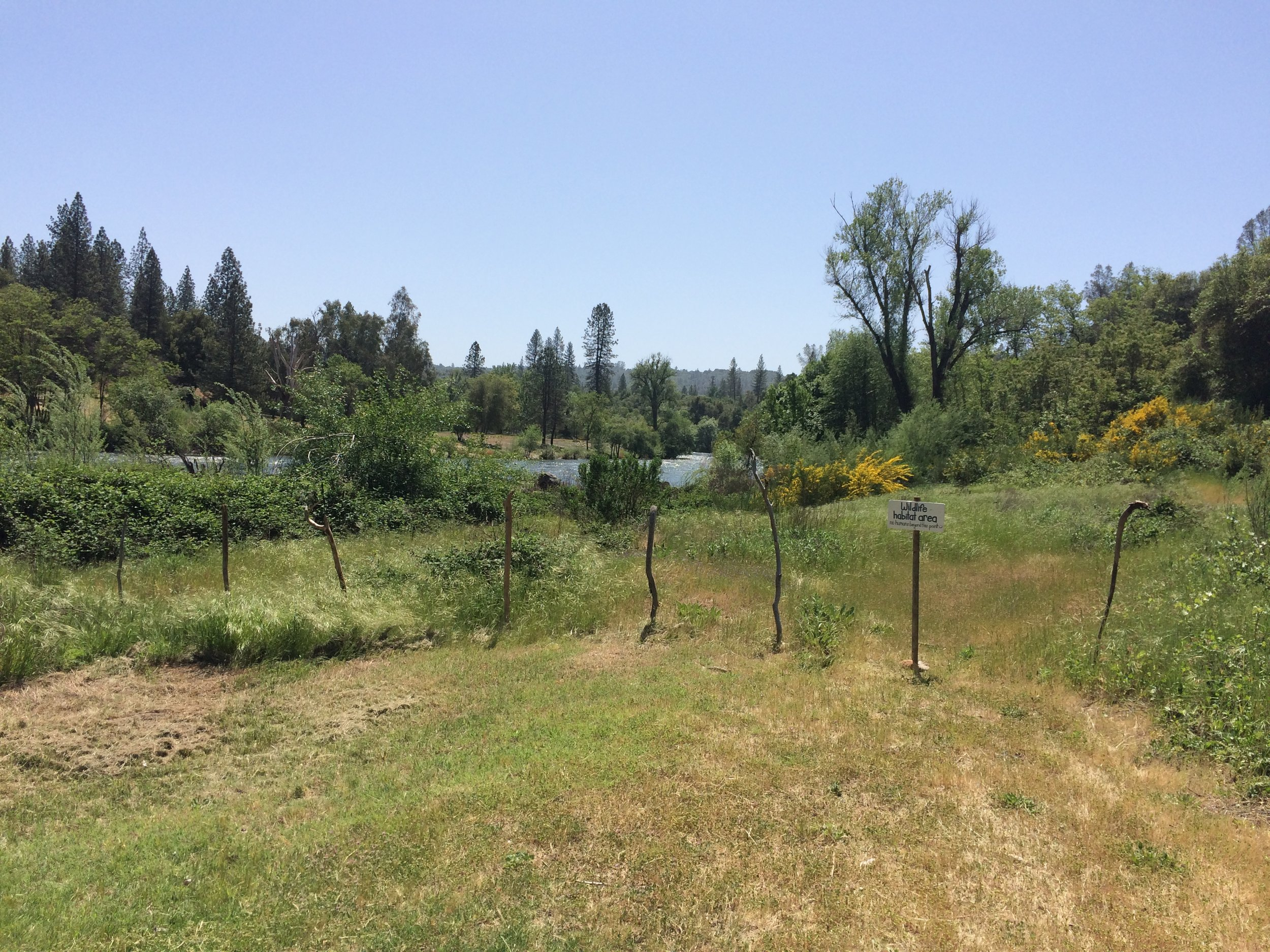 Driftwood 'fence' for wildlfie habitat area.