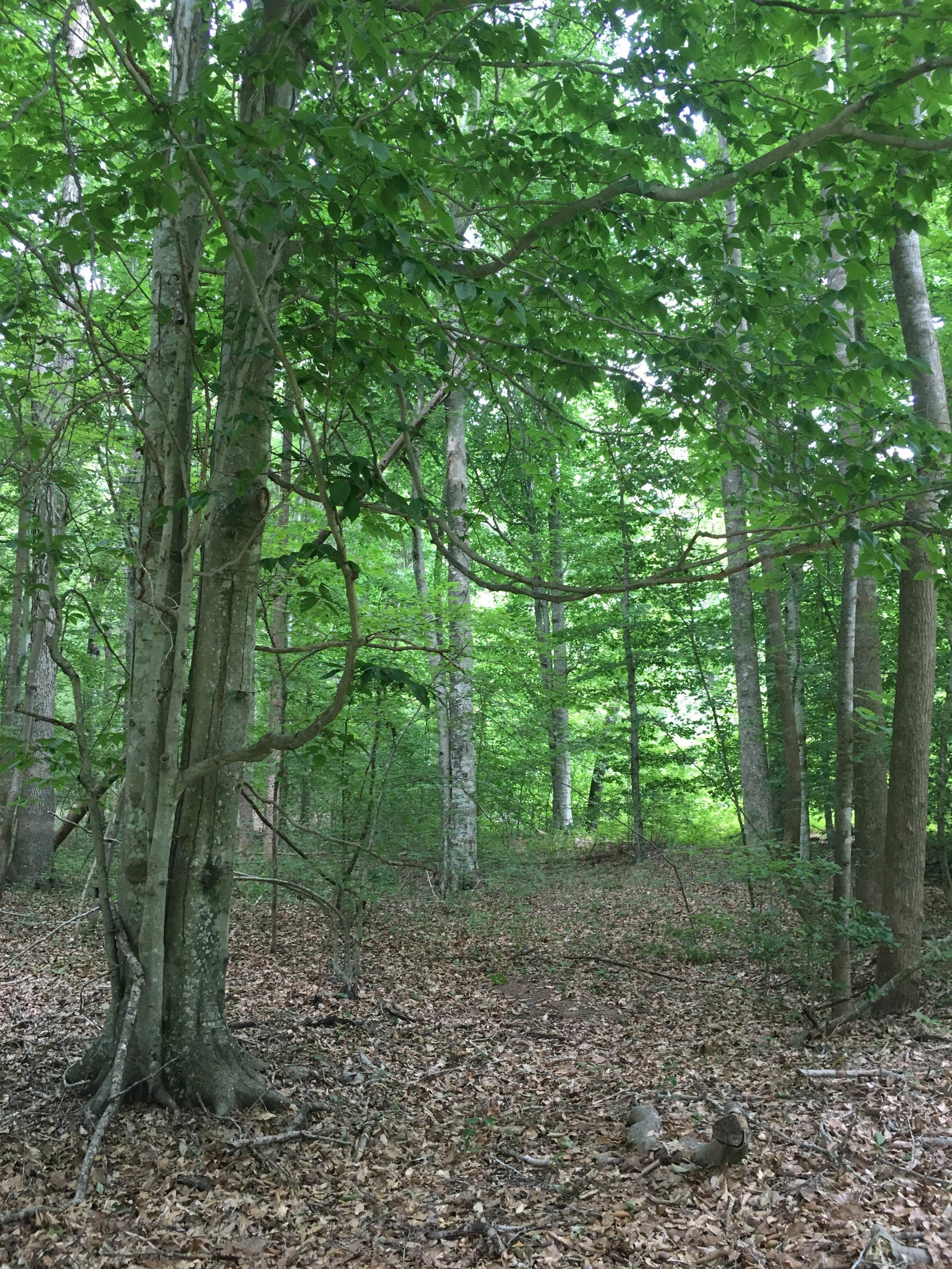 Maybrook Forest