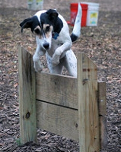 Bring your Fido and have fun in the Millbrook Dog Park.