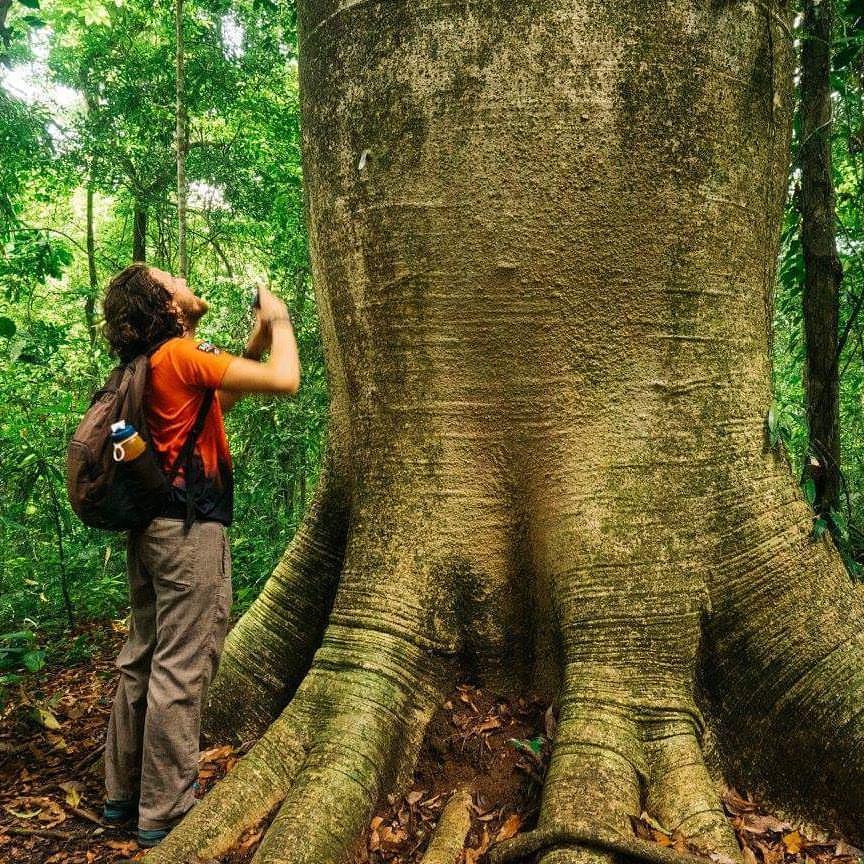 big ass tree.jpg