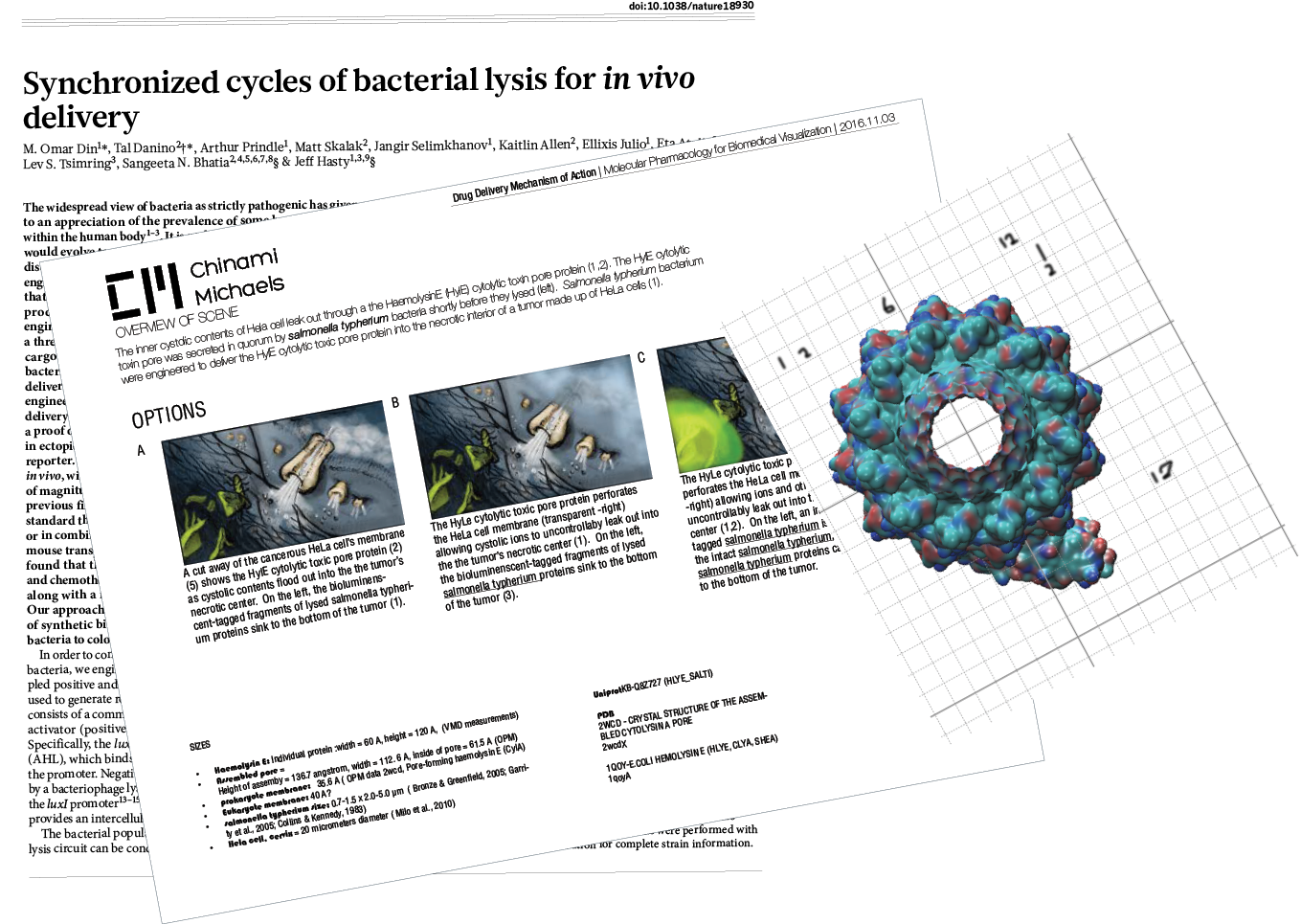 1. Research by reading scientific literature2. Design concepts3. Model proteins to scale. - .