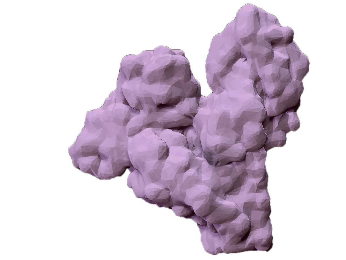 ZBrush_albumin.png
