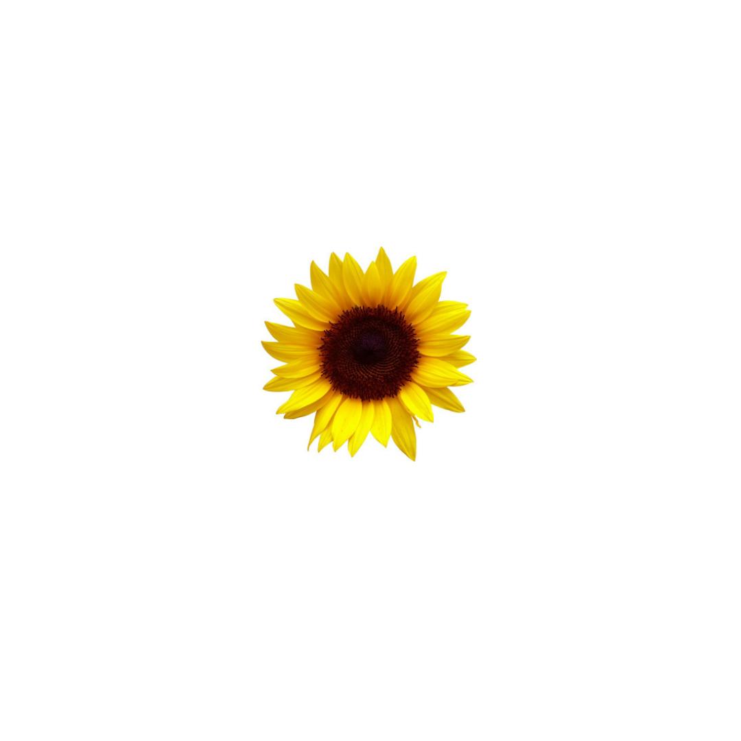 Destiny tiny flower.jpg