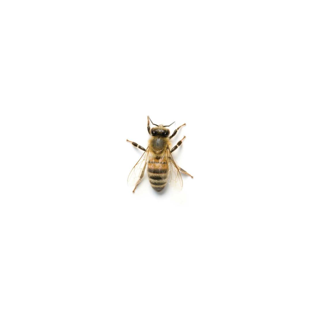 tiny bee.jpg